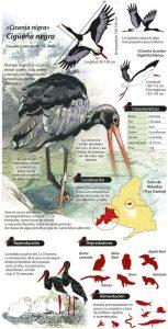 ciguena-negra-madrid