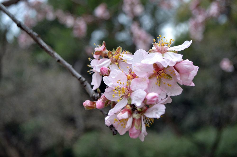 primavera5